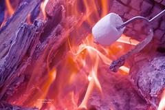Hot & Sweet (mariola aga) Tags: bonfire flames wood marshmallow sweet hot melting hue closeup