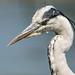 Heron Leighton Moss