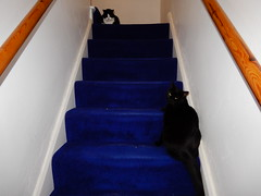 I think I interrupted something (cleanskies) Tags: harlequin scribble cats stairs