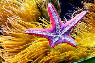Beautiful colours ion this star fish
