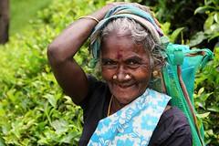 Sri Lanka, tea pickers (1) (walterkolkma) Tags: srilanka tea pickers teapickers centralhighlands nuwaraeliya strathdon teaestates women laborers tamils sonya6300