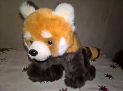 WP_20170614_23_02_38_Pro (vale 83) Tags: red panda toy nicrosoft lumia 550 friends macrodreams wpphoto wearejuxt coloursplosion colourartaward autofocus beautifulexpression flickrcolour