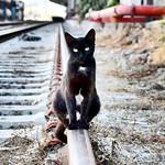 Guapa y cariñosa. Se merecería estar en un hogar  #gatos #gatoscallejeros #cats #photocats #instacats #neko #meow #gatze #gatto #koshka #catsofworld #catsofinstagram #streetcats  #animalaugh thumbnail