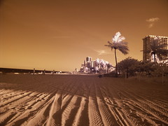 IR: Hollywood, Fl (dzmears) Tags: infrared ir beach palm trees ocean city florida hollywood miami