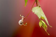 Play swing (keiko*has) Tags: 7dwf sunday fauna snail swing かたつむり ブランコ
