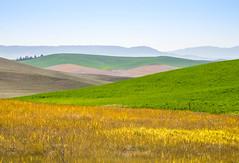 Palouse Hills (Endangered71) Tags: palouse palousehills farm color easternwashington steptoebutte