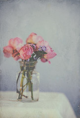 Late roses (borealnz) Tags: roses jar glass flowers pretty grunge table cloth simple