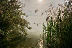 DSC_2111 (thomas.roesl) Tags: lago lagodigarda italia italien italy sunset nikon nikond7100 d7100 sigma sigma1020mmf456 1020