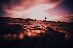 on the beach (ewitsoe) Tags: beach combing sea tide sand denmark sunset redglow spring canon sigma fun heritagetour journey art series lens 20mm dusk sundown late evening singleperson walking europe dk danish
