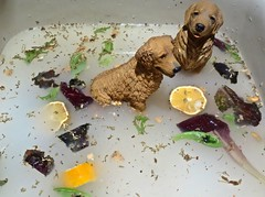Two Dogs in Dirty Water (ricko) Tags: sink water dirty dogs figurines goldenretrievers scum werehere 156365 2017