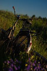 Reliable Bike (Ludwig Ohlson) Tags: finland scandinavia sunrise samyang 50mm xe2 fujifilm nordic summer midnightsun nature bike old