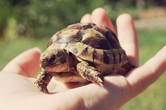 Tortue (charlinechampeil) Tags: turtle main terre tortue carapace a6000 sony
