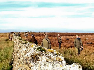 Scotland Bird Hunting 2