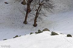 Snow 25 ... (Bijanfotografy) Tags: nikon nikond800 nikon180mm28afd india jammukashmir jk kashmir sonamarg snow mountainside northindia