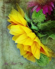 Sunflower Bouquet (Jean Turner Cain) Tags: flower flora floral flowers fleur bloem blomst texture textured textures adobe art photoshop jeanturnercain