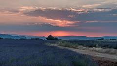 Coucher de soleil sur le plateau de Valensole - Alpes de haute Provence (pascal548) Tags: lavande montventoux nuit plateaudevalensole ciel valensole alpesdehauteprovence france