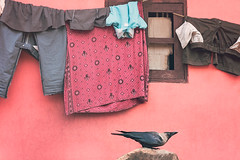 Pink. Chennai, India (Marji Lang Photography) Tags: chennai ef247028l india indiansubcontinent madras tamilnadu travelphotography animal bird blackbird clothes color colorful colors composition corvus crow drying dryingcloth dryinglinen indian mood nopeople oneanimal pastel photography pink pinkhouse poetic scene simplicity still streetphotography tones tranquility travel travelanddocumentaryphotography