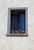 Castel Sant'Elmo, Naples, Italy (SomePhotosTakenByMe) Tags: window fenster castelsantelmo festung fortress urlaub vacation holiday italy italien naples napoli neapel city stadt outdoor vomero flower blume plant flora gebäude building