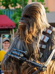 Smile When You Say That (ddindy) Tags: chewbacca starwars disneyshollywoodstudios waltdisneyworld disneyworld disney orlando florida