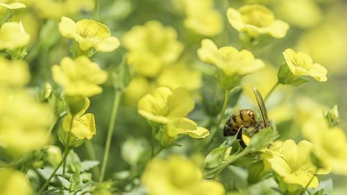 Biene & Blümchen