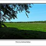 Andreas Kalbow Landschaft 2017.05.22 Fischland Darß (14) thumbnail