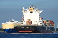 MSC Alyssa DST_1276 (larry_antwerp) Tags: mediterraneanshipping msc container schip ship vessel 船 船舶 אונייה जलयान 선박 کشتی سفينة schelde 斯海尔德河 スヘルデ川 스헬더 강 رود شلده سخيلده rilland nederland netherlands zeeland eukor asiantrust pctc roro 9203590 9235050