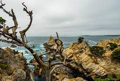 North Point (dennisjohnston17) Tags: pointlobos waves cypress breakers aqua coast pacific carmel california northpoint beach