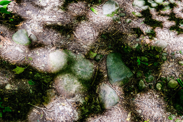 Spurgeon Nature Preserve - June 21, 2017