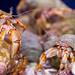 Lyme Regis Marine Aquarium