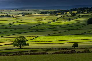 Fields near Wardlow