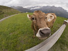 GOPR0966 (michael40001) Tags: sölden tirol österreich gopro goprohero5black at kuh cow gaislachkogel alpen alps austria eperke inexplore