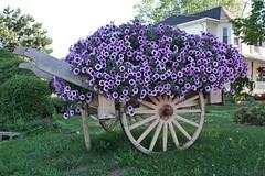 Flower Wagon (Craigford) Tags: charlottetown pei canada wagon flowers garden wagonwheel