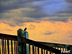 Evening Song (TwinLotus II) Tags: bird night sparksnv orange blackbird