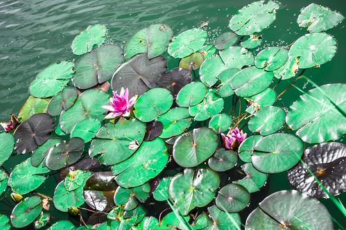 On a small lake