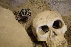 20170626X2059_Leopardgecko_0049 (RascheBilder) Tags: leopardgecko raschebilder