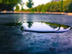 Water on the ground (bamdadnorouzian) Tags: green blue love summer life health tree rain waterdrops water