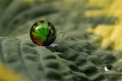 In order to be irreplaceable one must always be different. Coco Chanel. (hey ~ it's me lea) Tags: marble leaf hosta waterdrops green glass 52weeproject