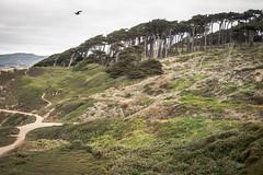 Lands End, San Francisco (Sharon Mollerus) Tags: landsend sutropark cypresstrees pointlobos sutrodistrict sanfrancisco california unitedstates us cfpti17
