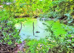 Green Vibes (Francesco Impellizzeri) Tags: brighton england landscape canon trees green pond