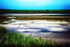weg water (roberke) Tags: nature natuur plants planten plas dry droog sky lucht blauw blue outdoor