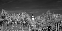 Lighthouse through the Palms (Neal3K) Tags: stsimonsisland georgia coast lighthouse ir infraredcamera kolarivisionmodifiedcamera