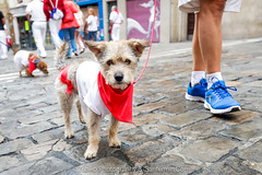 "Javier_M-Sanfermin2017110717001-2 • <a style=""font-size:0.8em;"" href=""http://www.flickr.com/photos/39020941@N05/35684578372/"" target=""_blank"">View on Flickr</a>"