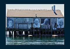 Widows (The Bop) Tags: portraits women widows sea ocean warehouse tribute memorial gulls weathered stilts