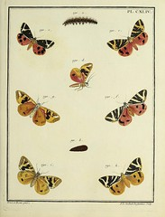 n126_w1150 (BioDivLibrary) Tags: biologicalspecimens butterflies butterfliesinart collectionandpreservation earlyworksto1800 europe lepidoptera moths mothsinart pictorialworks smithsonianlibraries bhl:page=53453449 dc:identifier=httpbiodiversitylibraryorgpage53453449 nmnhexhibit dazzlingdiversity