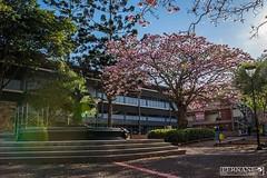 Universidad de costa rica en un día de verano (fernandoriverarivera) Tags: nikon verano colour color picture pic photo summer flowers tree nature costarica university universidad