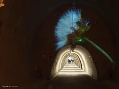 underground-tunnel-floraart-instalation_15