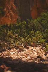 DSC_5653 (Brandon Minieri Photography) Tags: utah arizona zion zionnationalpark brycecanyon night astars milkyway camaro chevy chevrolet blackandwhite coralpink sand sanddunes dunebuggy antelope antelopecanyon canyon horseshoebend minieri brandon