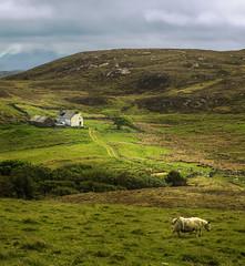 A House on Stoer Peninsula, Assynt (Melnikovi) Tags: highlands scotland assynt stoer road house sheep