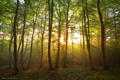 Sun is shining (Hector Prada) Tags: bosque sol bruma niebla primavera hojas naturaleza luz forest sun light fog mist spring magical leaves sunrise árbol tree paisvasco basquecountry
