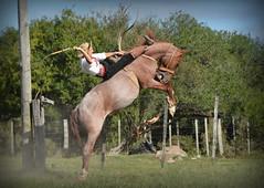 Calixto Clavijo (Eduardo Amorim) Tags: gaúcho gaúchos gaucho gauchos cavalos caballos horses chevaux cavalli pferde caballo horse cheval cavallo pferd crioulo criollo crioulos criollos cavalocrioulo cavaloscrioulos caballocriollo caballoscriollos pampa campanha fronteira bagé riograndedosul brésil brasil sudamérica südamerika suramérica américadosul southamerica amériquedusud americameridionale américadelsur americadelsud cavalo 馬 حصان 马 лошадь ঘোড়া 말 סוס ม้า häst hest hevonen άλογο brazil eduardoamorim gineteada jineteada